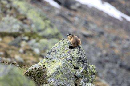 Marmotta Lago Inferno
