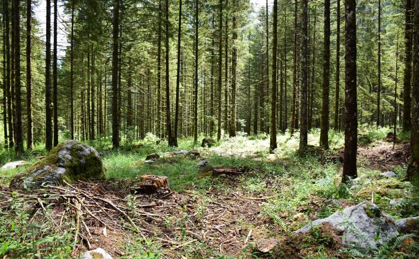 Foresta Masino: Finland orLombardia?