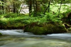 Foresta Masino