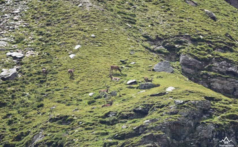 Fauna in ValZebrù