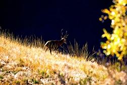 deer befunk