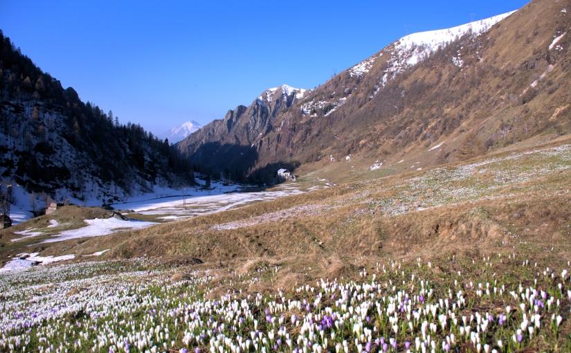 Primavera in ValBiandino