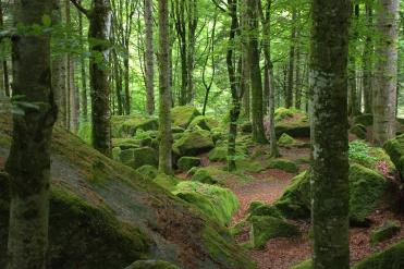 Foresta Val Masino